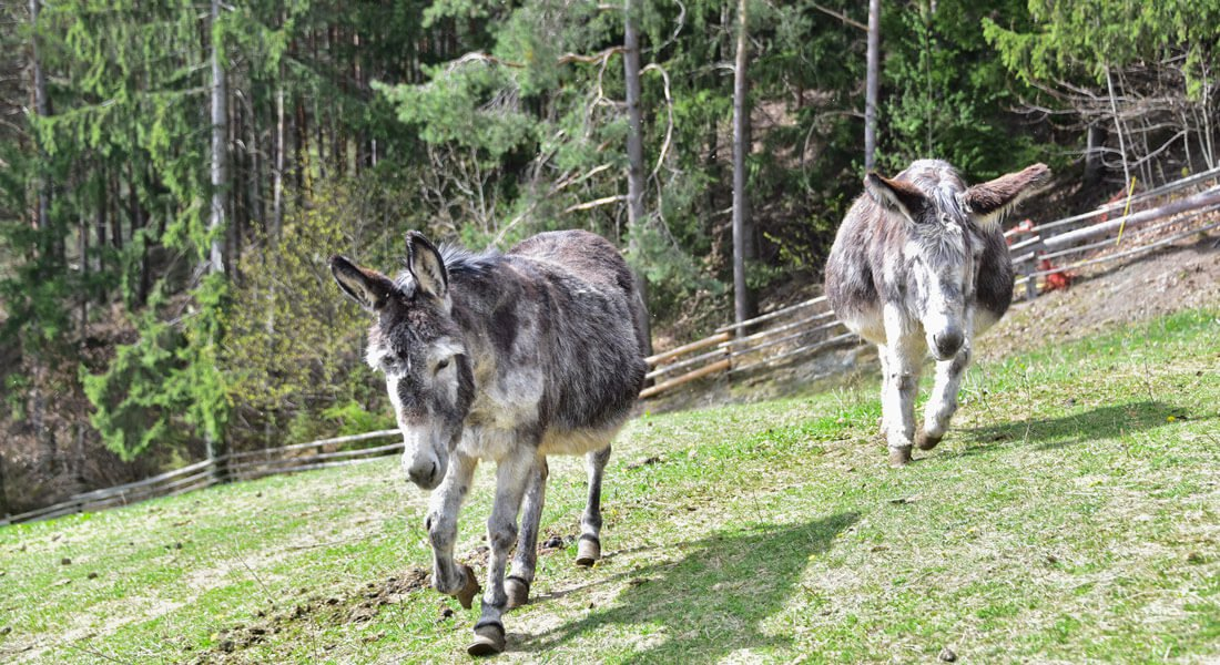 Vacanze in agriturismo con bambini al maso Saderhof