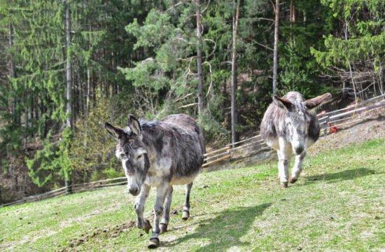 saderhof-bressanone5