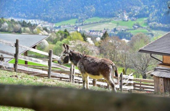 saderhof-bressanone7